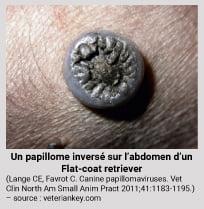papillomavirus chez un chien