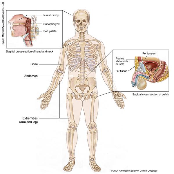 AJCC Cancer Staging Manual - leacurinaturiste.ro