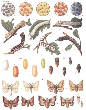 pastile de dieta cu larve de vierme