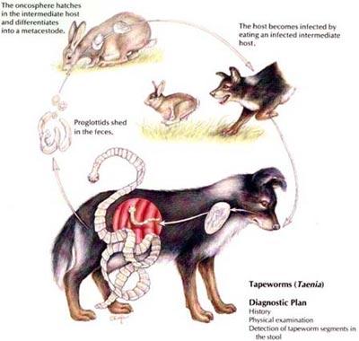 Remedii Naturiste Pentru Paraziti Intestinali