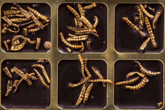 tipuri de viermi paraziti