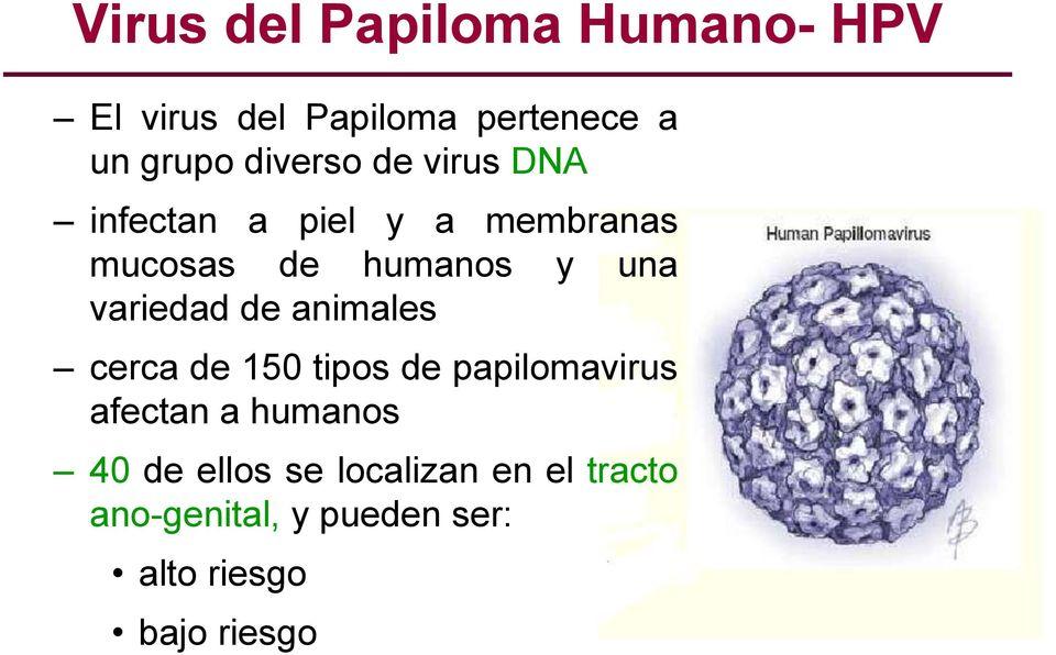 virus del papiloma humano (hpv por sus siglas en ingles)