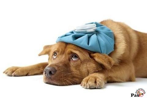 virusi kod pasa hpv therapy mehmet