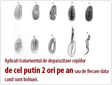 Parazitozele intestinale – tipuri de paraziti intestinali si tratament