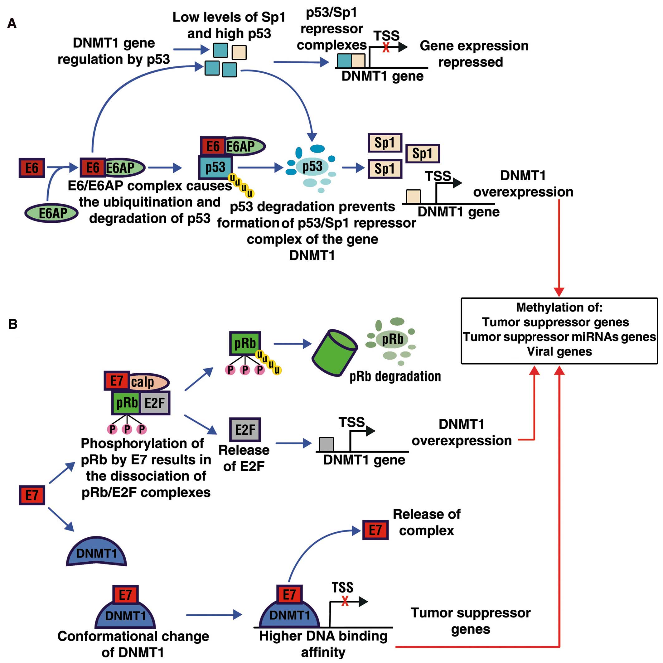 papilloma virus rna cancer pancreatic
