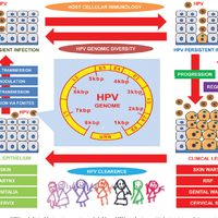 human papillomavirus in neonates hpv males vaccine
