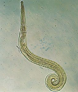 Praktischer Leitfaden der Parasitologie des Menschen: A. Erhardt ·   Books Express