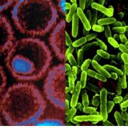 bacterii virale