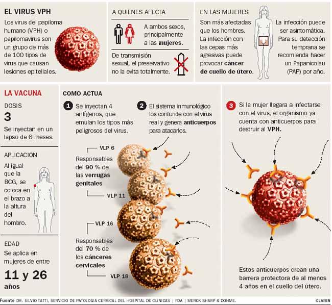 virus papiloma humano deteccion