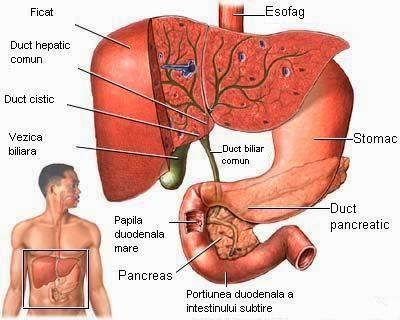 cancer cerebral etapa 4 hpv tumore gola