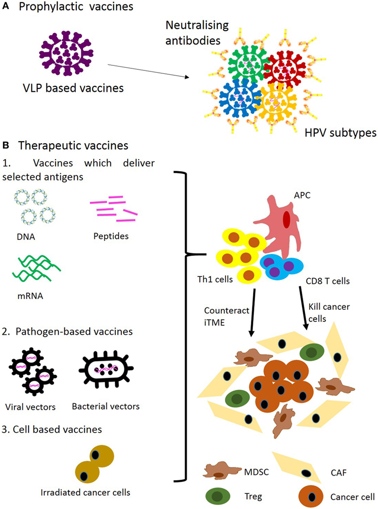 hpv e cancer