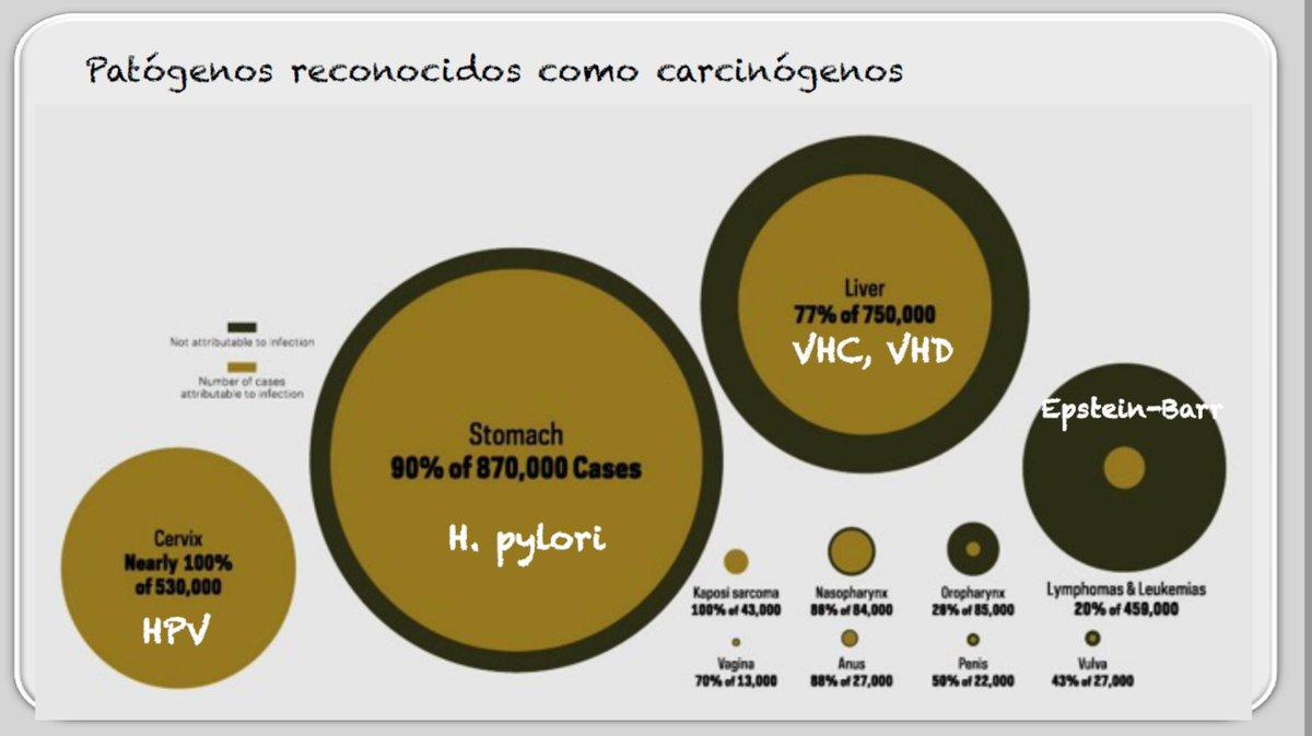 hpv vaccine kondylomer enterobiasis meaning