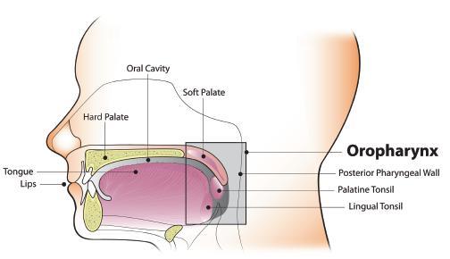 hpv oropharynx cancer tabara de detoxifiere techirghiol
