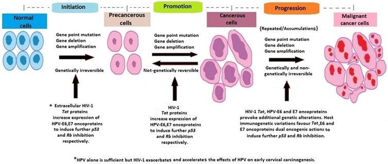 hpv that causes precancerous cells