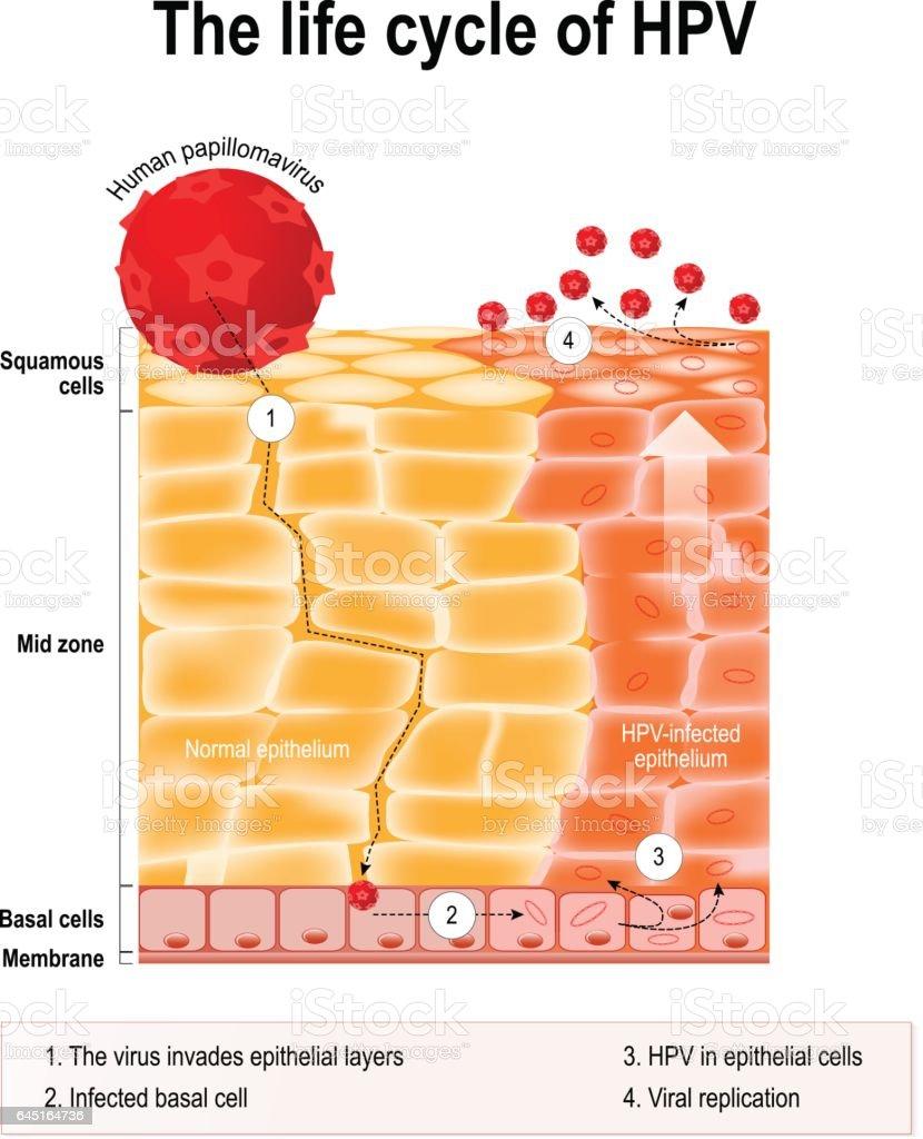 cancer colon resection cancerul colonului si rectului