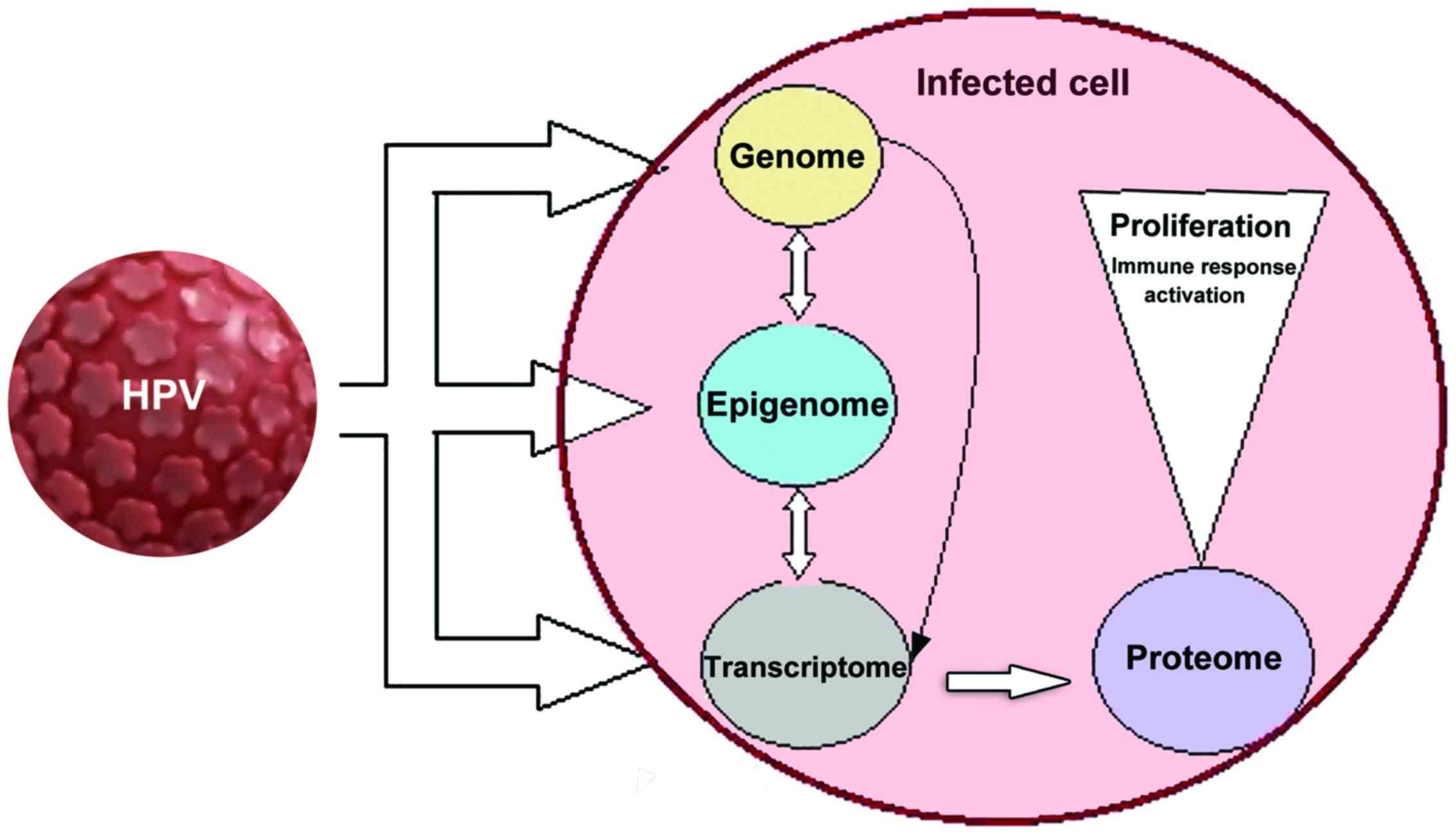 papillomavirus oncogene transmission virusi la bebelusi