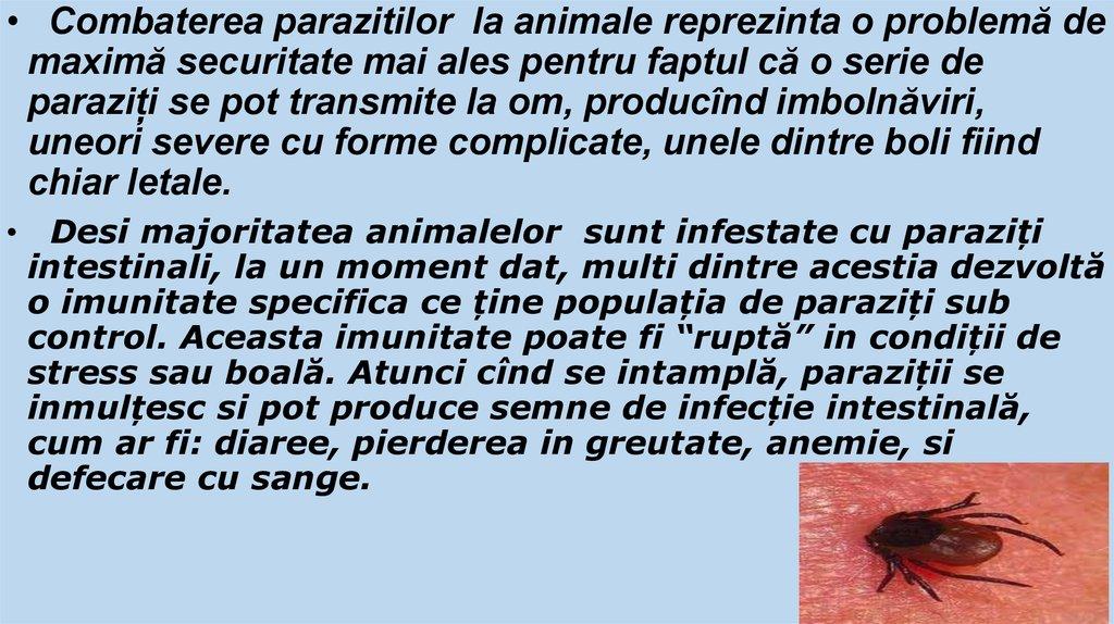 paraziti externi la porci