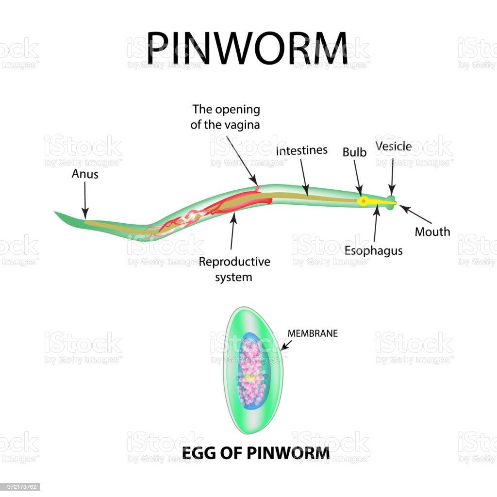 il papilloma vescicale e maligno papiloma humano nedir